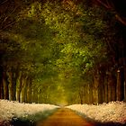 Path of Joy by LarsvandeGoor