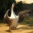 Goose Pride by veteran