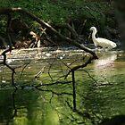 Snowy Egret by veteran