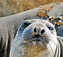 Whatchoo Lookin' At? by Bob Wall