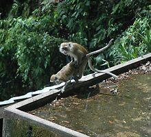 Monkey Love by hayleychard
