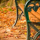 Autumn leaves surround the bench in a blanket of orange by Elana Bailey