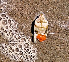 Crab and Foam by Bob Wall