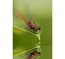 Reflect on Damsel Photographic Print