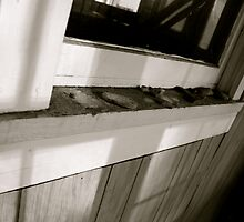 Sun Porch Window by JVBurnett