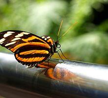 Bar Dancer by tigerwings