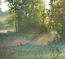 Sunstreaks by mltrue