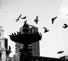 Pigeon Perch by NJC Photography