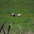 Pretty Bums  ;p by Tracy Faught