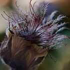 Marvelous (from wild flowers collection) by Antanas