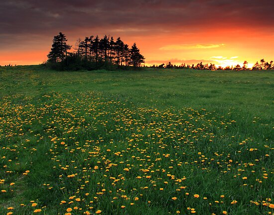 Dandy Sunset by Brian Carey