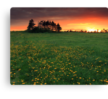 Dandy Sunset Canvas Print