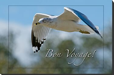 Bon Voyage Greetings by Bonnie T.  Barry