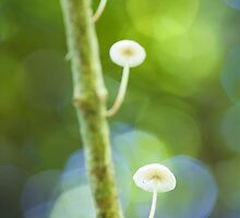 'Shrooms on a stick by Christopher Bookholt