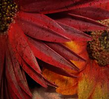 Textured Petals by Chelsea Brewer