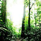 The Brazilian Atlantic Rainforest by 1001pawprints