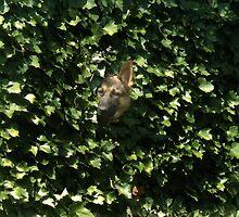 Hiding In The Brush by Hallie Duesenberg