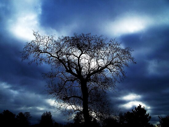 TREE IN BLUE by trueblvr