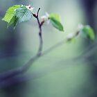 spring grace by Nika Seliverstova
