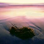 'Kelp at Twilight' by DLUhlinger