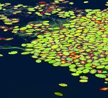 'Lily Pond' by DLUhlinger