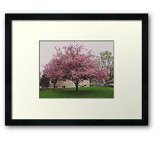 Visual Texture Crab Apple Tree Framed Print