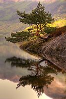 The Rowardennan Bonsai by Karl Williams