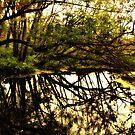 Morning Reflexion  by terrebo