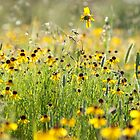 Field of Yellow by Jenny Ryan