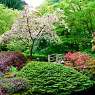 A Tree Blooms in Japanese Garden... by Carol Clifford