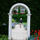 Garden Hedge Portal by Carol Clifford