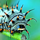 Close Up - Cairns birdwing caterpillar by Jenny Dean