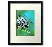 Close Up - Cairns birdwing caterpillar Framed Print
