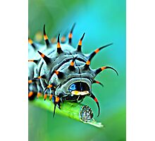 Close Up - Cairns birdwing caterpillar Photographic Print