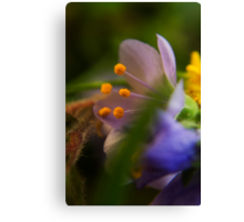 Palette (from wild flowers collection) Canvas Print