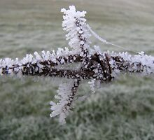 Ice covered barbed wire by Tania Hauser