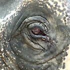 Elephant Eye by Kristin Nichole Hamm