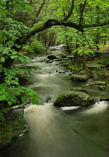 Forest Stream by Stephen Vecchiotti