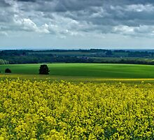 North Downs Way 44-18 by gollum1985
