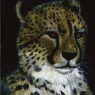 Cheetah by Jedro