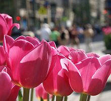 Tulips in the city. by azureskies