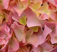 'Into the Pink Hydrangea...' by Scott Bricker