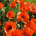 poppies - to remember & say thank you to all the wonderful soldiers by dawnpeace