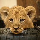 I`m So Tyred!! by Franco De Luca Calce