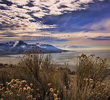 Antelope Island by Gene Praag