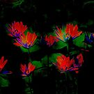 Water Lilies Silk Print by coppertrees