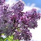 Lilacs on Blue by Janes Blond