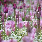 Pink Tulips by Tim Yuan