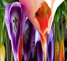 Melted Tulips by R&PChristianDesign &Photography