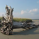 Barrier Beach Driftwood, Wells, ME by Judi FitzPatrick